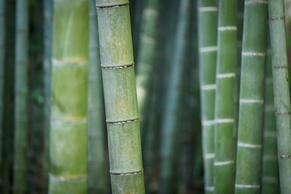 bambou fabrication montres en bois
