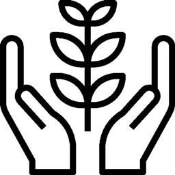 reforestation 1 montre bois 1 arbre plante